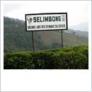 セリンボン茶園